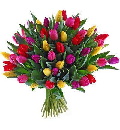 pol pl Bukiet-50-kolorowych-tulipanow-548 1